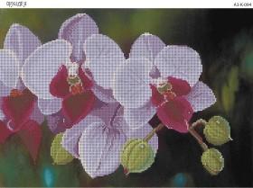 Схема для вышивки бисером на габардине Орхидея