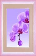 Схемы вышивки бисером на авторской канве Орхидея