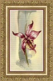 Набор для частичной вышивки крестом Лиловая орхидея Чарiвна мить (Чаривна мить) РК-111 - 256.00грн.