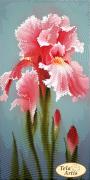 Схема вышивки бисером на атласе  Садовые зарисовки. Розовый ирис