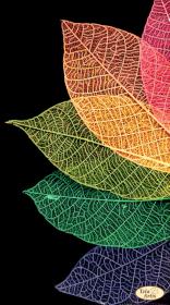Схема для вышивки бисером на атласе Радужный веер