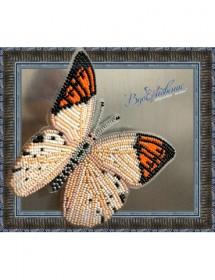 Набор для вышивки бисером на прозрачной основе Бабочка Гебомоя Главк, , 160.00грн., BGP-018, Вдохновение, Брошки для вышивки бисером