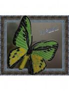 Набор для вышивки бисером на прозрачной основе Бабочка Птицекрыл Голиаф