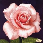 Схема вышивки бисером на атласе Роза Афродита