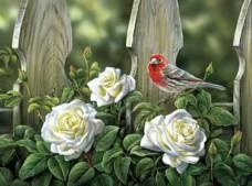 Набор для выкладки алмазной мозаикой Птица на садовых розах Алмазная мозаика DM-330