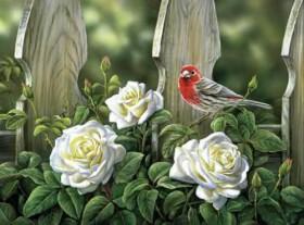 Набор для выкладки алмазной мозаикой Птица на садовых розах Алмазная мозаика DM-330 - 430.00грн.