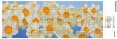 Схема вышивки бисером на атласе Панно Нарциссы Юма ЮМА-376-1