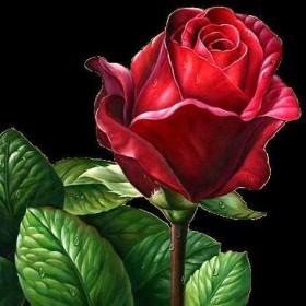 Набор для выкладки алмазной мозаикой Алая роза Алмазная мозаика DM-333 - 545.00грн.