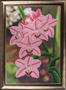 Схема вышивки бисером на атласе Орхидеи