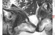 Схема вышивки бисером на габардине Волки
