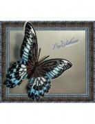 Набор для вышивки бисером на прозрачной основе Бабочка Парусник Полимнестор