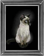 Набор для вышивки крестом Сиамская кошка