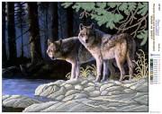Рисунок на атласе для вышивки бисером Волки на берегу