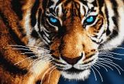 Рисунок на атласе для вышивки бисером Тигр