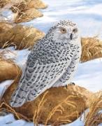 Рисунок на атласе для вышивки бисером Полярная сова