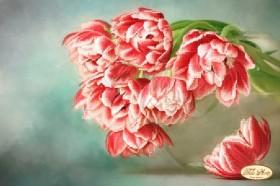 Схема вышивки бисером на атласе Бокэ. Тюльпаны Андорра
